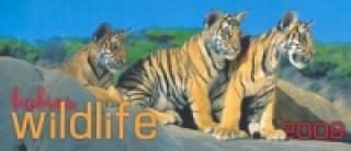 Wildlife babies 2009 - stolní kalendář