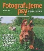 Fotografujeme psy