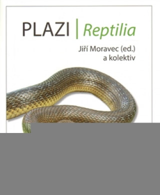 Plazi/ Reptilia