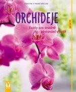 Orchideje