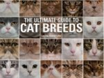 Ultimate Guide to Cat Breeds