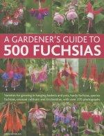 Gardener's Guide to 500 Fuchsias