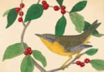 Audubon Holiday Half Note