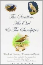 Swallow, the Owl and the Sandpiper