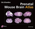 Prenatal Mouse Brain Atlas, w. DVD