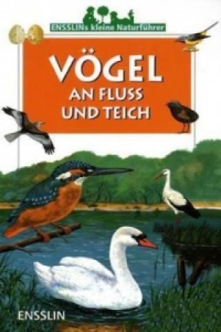 Vögel an Fluss und Teich