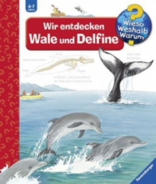 Wir entdecken Wale und Delfine
