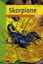 Skorpione im Terrarium