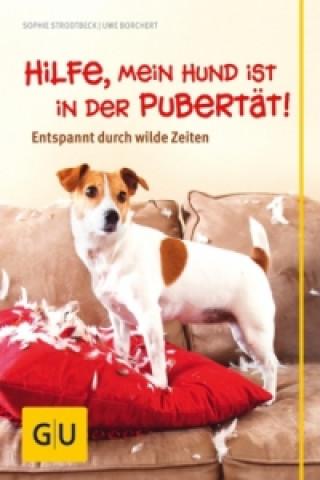 Hilfe, mein Hund ist in der Pubertät!