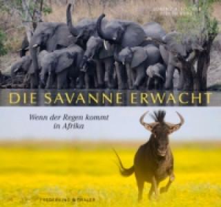 Die Savanne erwacht