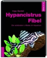 Hypancistrus-Fibel