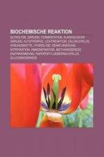 Biochemische Reaktion