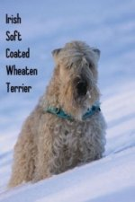 Irish Soft Coated Wheaten Terrier (Posterbuch DIN A3 hoch)