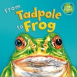 Lifecycles From Tadpole To Frog