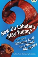 Bug Club Non-fiction How Do Lobsters Stay Young? (brown A /
