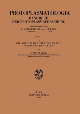 Amitose Der Tierischen Und Menschlichen Zelle