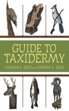 Complete Guide to Traditional Taxidermy