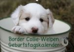 Border Collie-Welpen / AT-Version / Geburtstagskalender (Wandkalender immerwährend DIN A2 quer)
