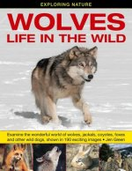 Exploring Nature: Wolves - Life in the Wild