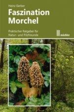Faszination Morchel