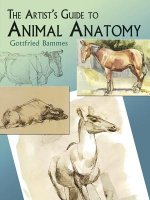 Artist's Guide to Animal Anatomy
