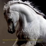 Arabian Horse of Egypt