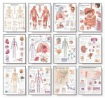 Body Systems Chart Set