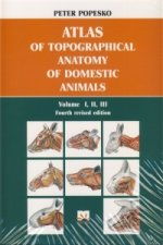Atlas of topographical anatomy of domestic animals