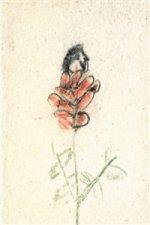 Z růže kvítek vykvet nám