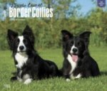 Border Collies - For the Love of 2017 - 18-Monatskalender mit freier DogDays-App