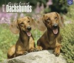 Dachshunds - For the Love of 2017 - Dackel