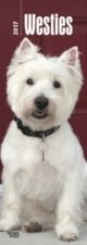 West Highland White Terriers - Westies 2017