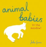 Animal Babies in the meadow!