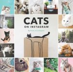 Cats of Instagram