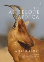 Antelope of Africa