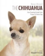 Chihuahua Best of Breed