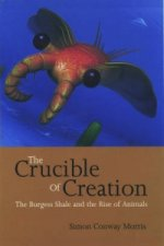 Crucible of Creation