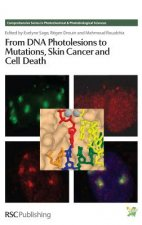 From DNA Photolesions to Mutations, Skin Cancer and Cell Dea