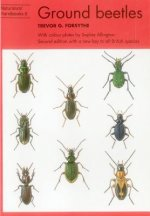 Common Ground Beetles