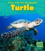 Sea Animals: Turtle