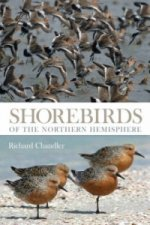 Shorebirds of the Northern Hemisphere