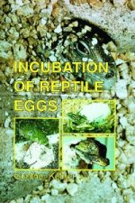 Incubation of Reptile Eggs