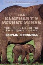Elephant's Secret Sense