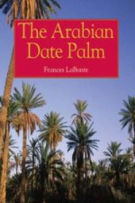 Arabian Date Palm