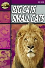 Rapid Stage 1 Set A: Big Cats Small Cats (Series 1)