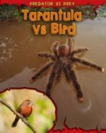 Predator Vs Prey: Tarantula Vs Bird