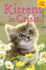 Kittens in Crisis