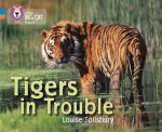 Tigers in Trouble