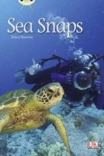 Sea Snaps (Green A) NF 6-Pack