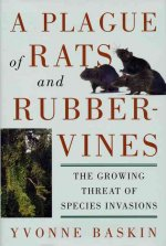 Plague of Rats and Rubbervines